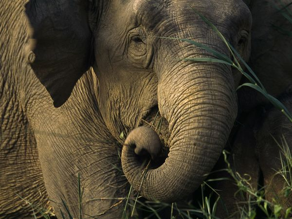 600x450xasian-elephant_449_600x450.jpg.pagespeed.ic.oLShqI5Q_7