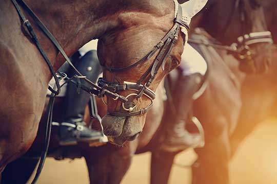 Create a Horse Bill of Sale Legal Templates - horse sales contracts