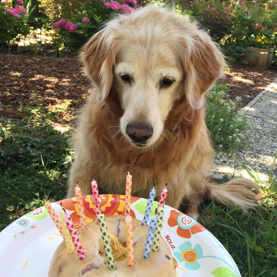 Happy 12th birthday to our faithful fifth family member Wellhellip