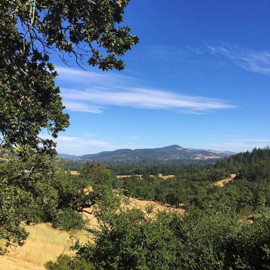Picture perfect summer day in Sonoma County