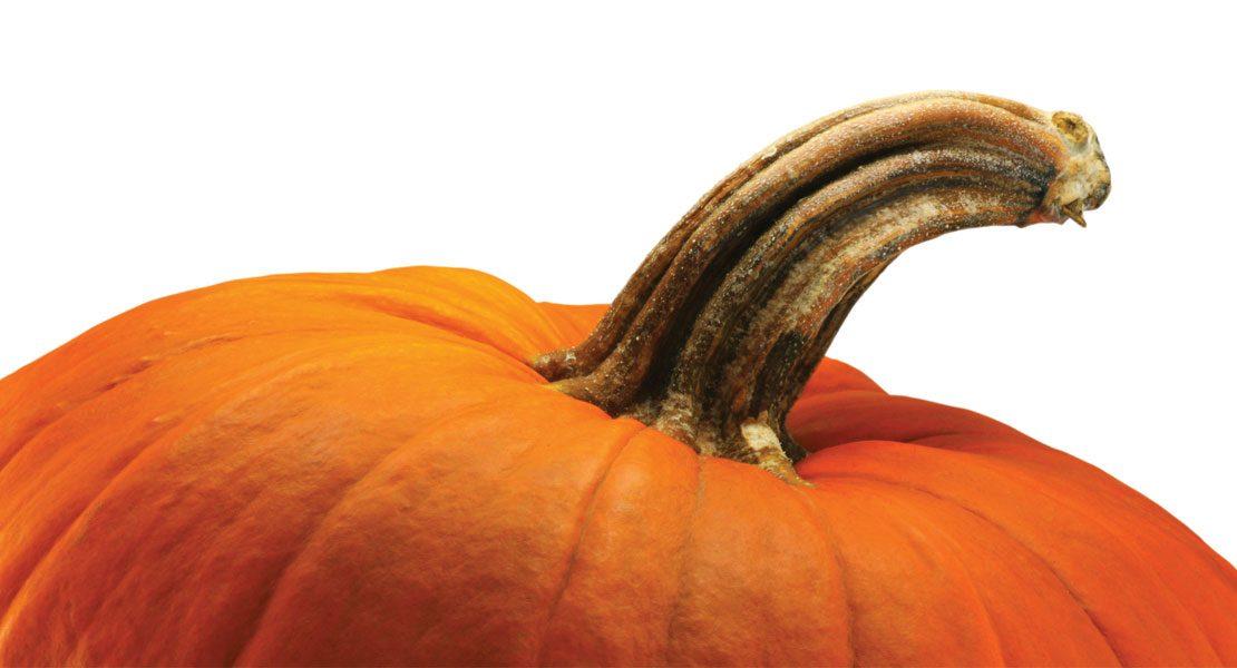 Fall Fun Pick-Your-Own Farms - Lehigh Valley MarketplaceLehigh