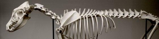 backbone-header