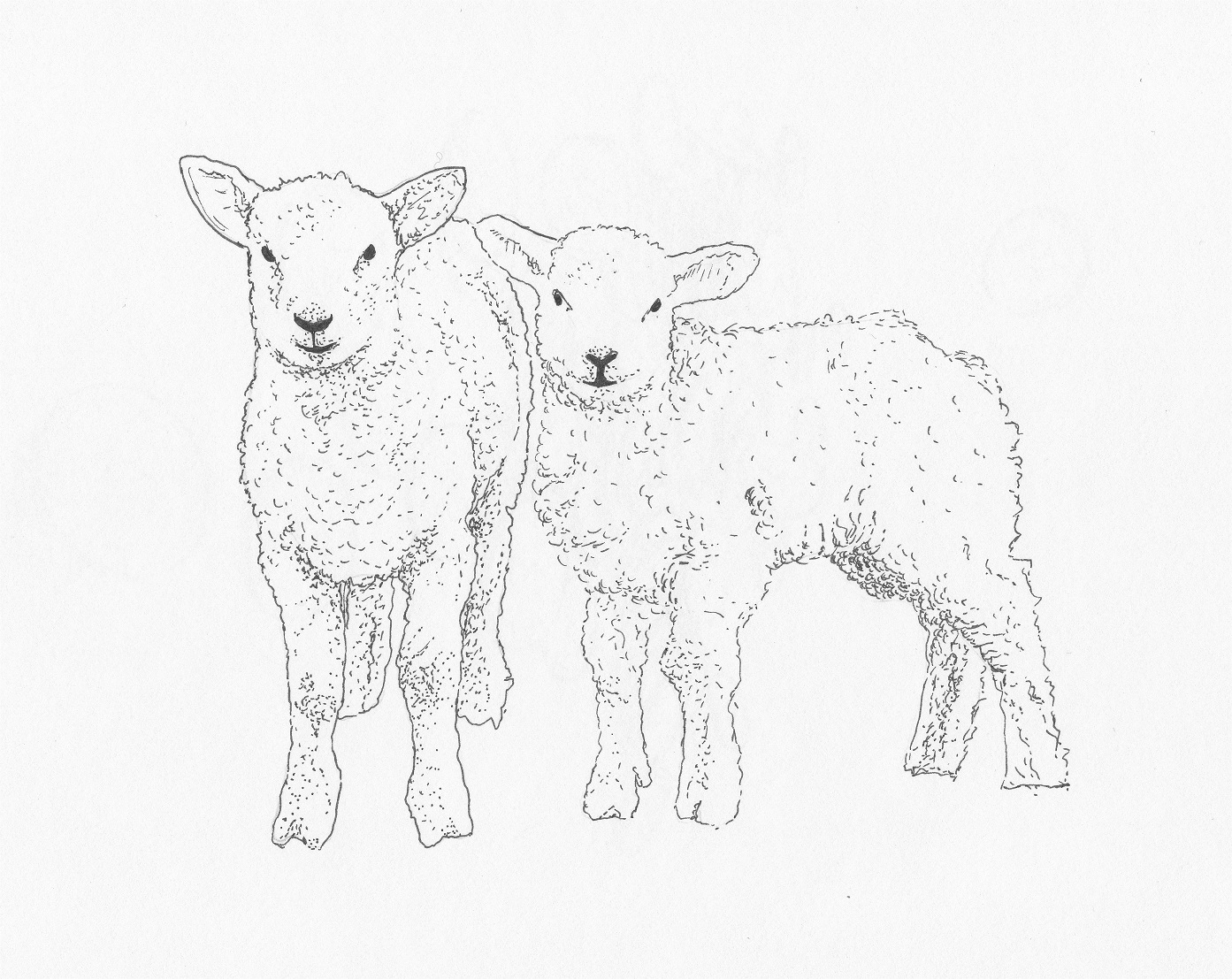 Baby Lamb Drawing Lamb Sketch Templates