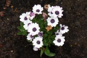 Kwiaty ogrodowe