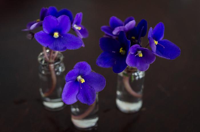 DIY Mini Violet Arrangement -lemonthistle.com