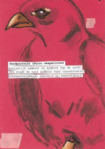 roodpootvalk