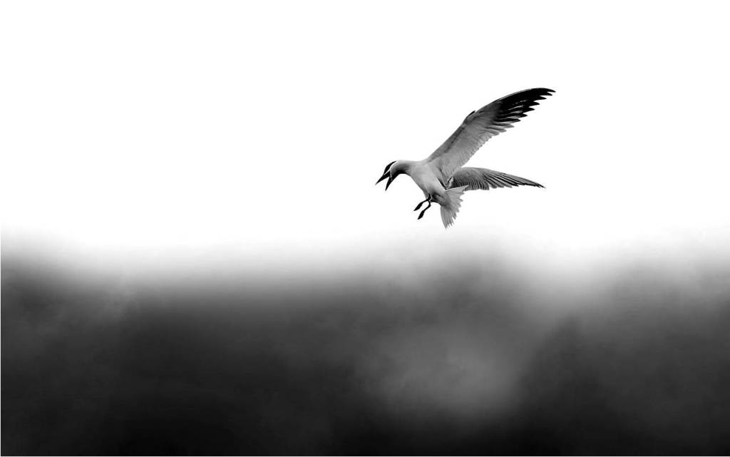 Leonor Reis, Marca Pessoal, Personal Brand, Branding Pessoal, Personal Branding, História de uma gaivota e do gato que a ensinou a voar, Luis Sepúlveda