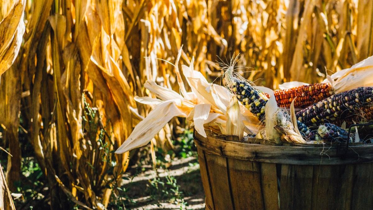 O co chodzi z tym GMO?