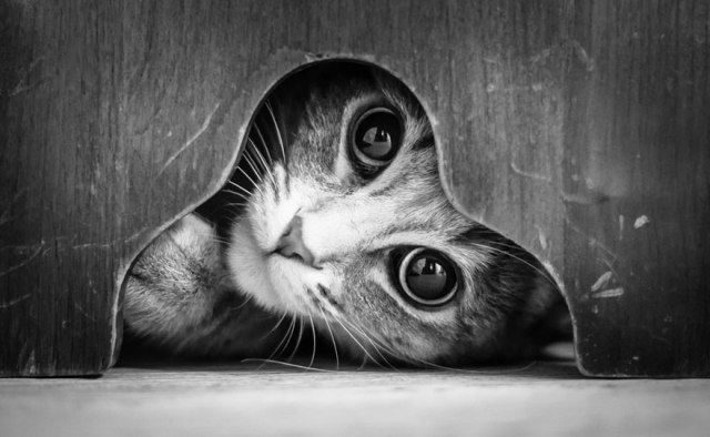 cat-looking-at-you-black-and-white-photography-1