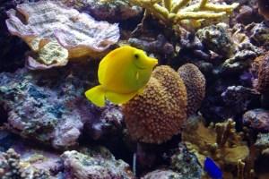 bel aquarium recifal 7335