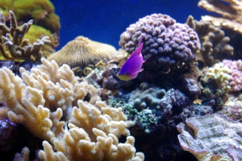 bel aquarium recifal 7337