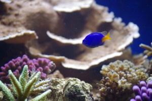 bel aquarium recifal 7341