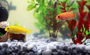 economiser aquarium