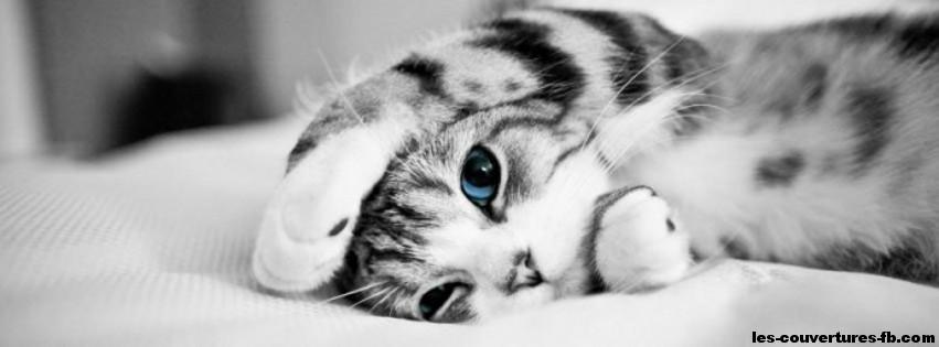 pourriture des nageoires en guérison ?  Chaton-noir-et-blanc-aux-yeux-bleus-Photo-de-couverture-journal-Facebook