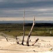 Dune de Petal Point