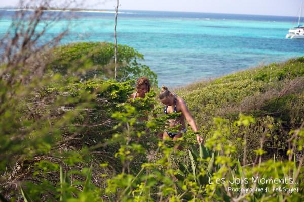 Tobago Cays 10