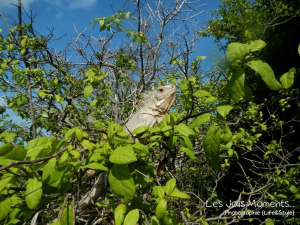 Tobago Cays 2