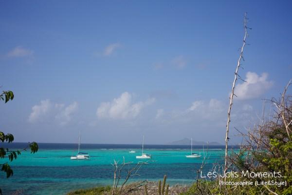 Tobago Cays 9