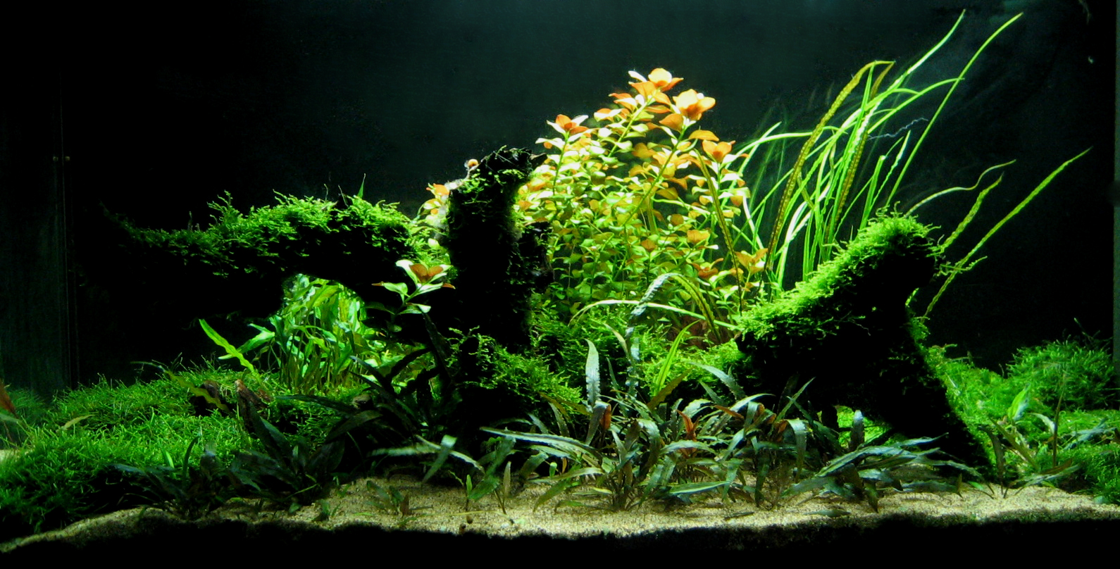 3d Fish Tank Wallpaper Aquarium Les Petits Univers Verts