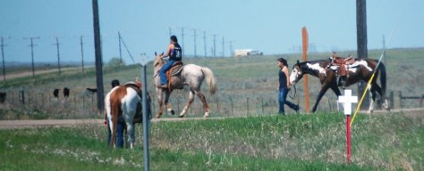Fort Belknap Native Americans getting the cattle rounded up.