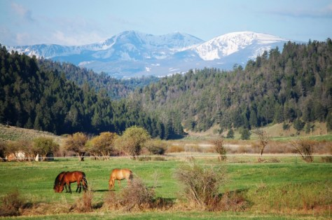 Horses graze in verdant meadows under the snow-capped mountains of the Big Belt Range