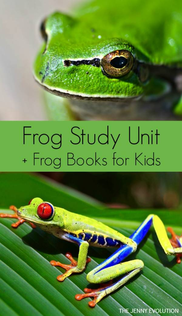 Learn about frogs with these frog unit study resources.