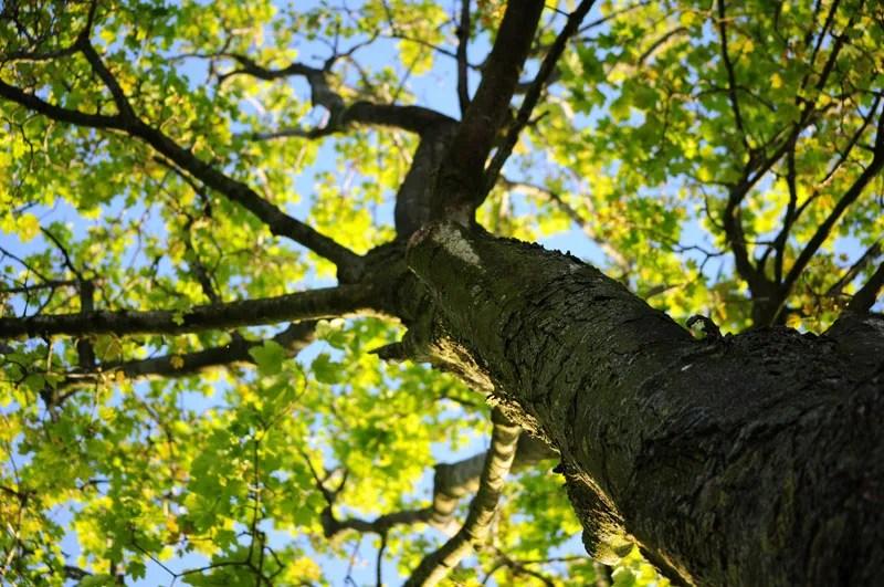Drought Tolerant Trees In San Diego - Letz Design