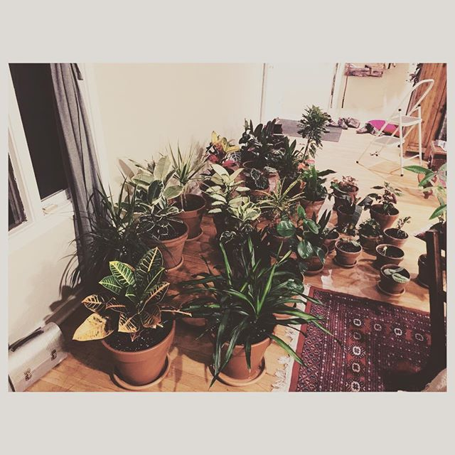 Done with spring potting and repotting. The only question is where the hell im going to put them? (Honestly i cant believe they grow this much in only one year!) #elcerritohome #boxesandpoets