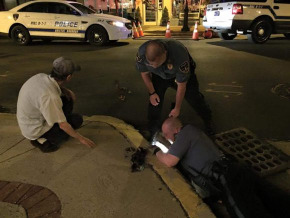 Police Officers Save Ducks From Storm Drain