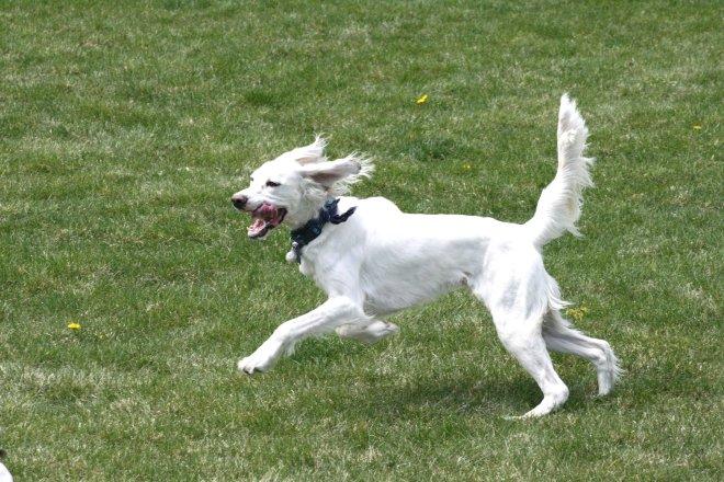 ollie running