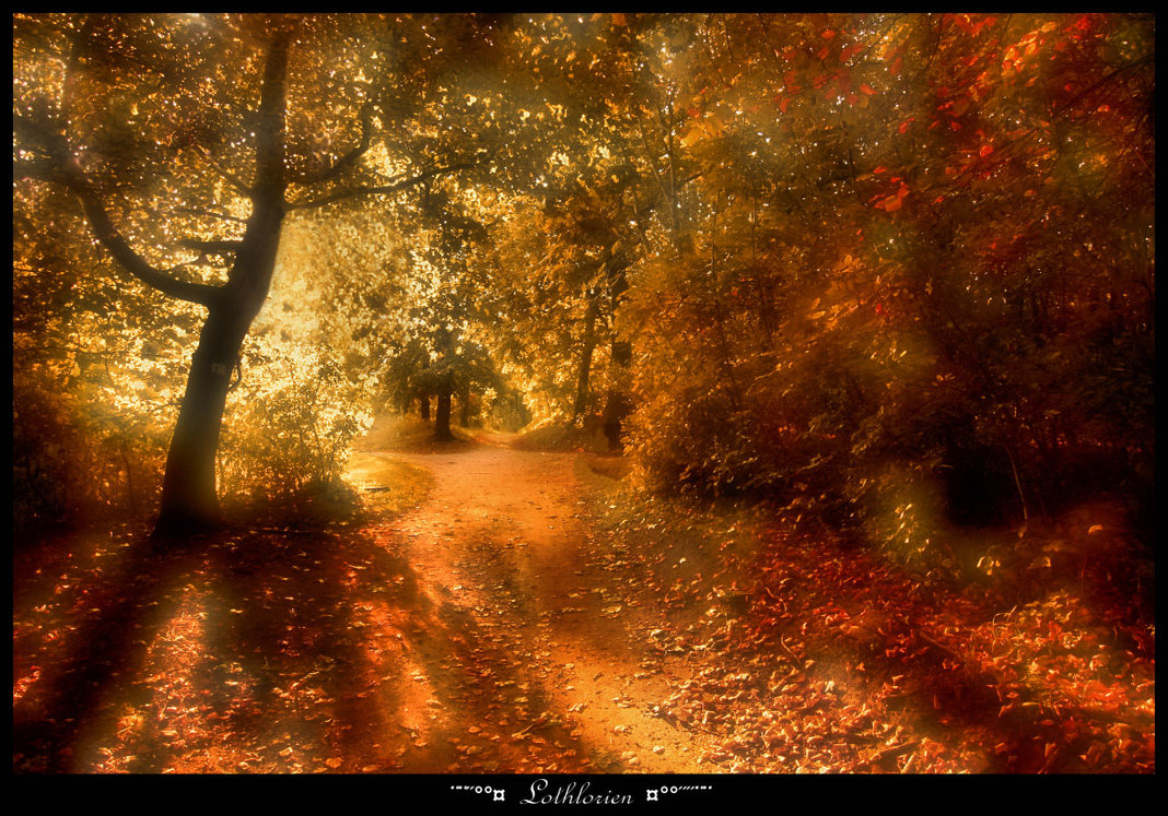 Granted Quotes Wallpaper On Lorien Amp Golden Leaves Truly Tolkien