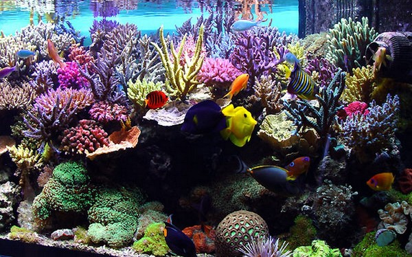 Desktop Aquarium 3d Mac Live Wallpaper Fond D Ecran Aquarium Magnifique