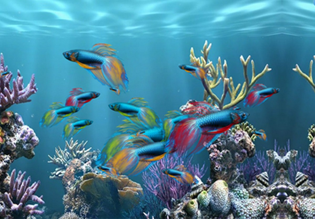 Image 3d Gratuit Desktop Background Fond D 39écran Animé Gratuit Aquarium