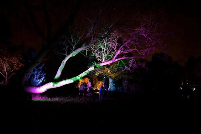 Syon Enchanted Woodland 6