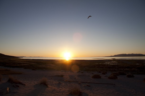 Sunset with Bird on Antelope Island.jpg