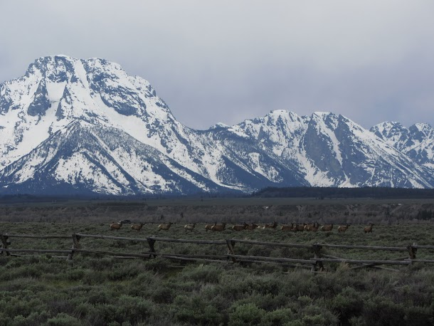 Grand Teton Mountain Range with Elk Herd
