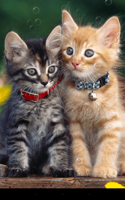 Double Cat Live Wallpaper - Android Apps on Google Play