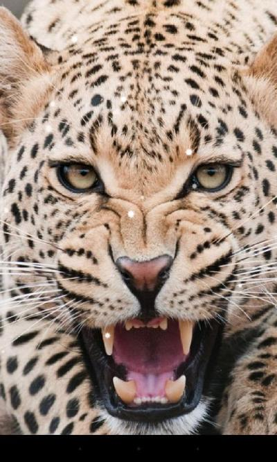 Leopard Live Wallpaper - Android Apps on Google Play