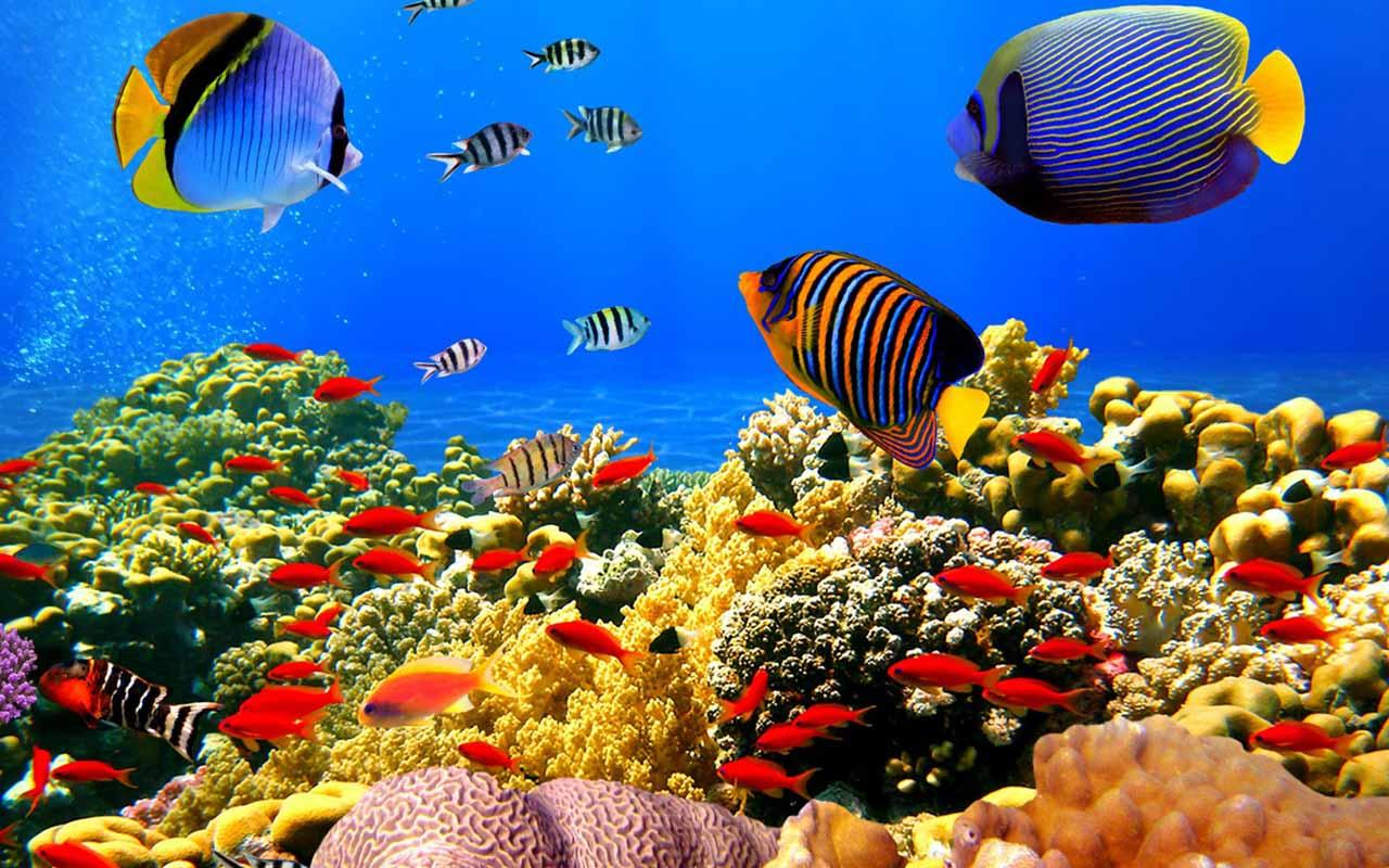 My 3d Fish Live Wallpaper Free Download Download The 5d Aquarium Live Wallpaper Android Apps On