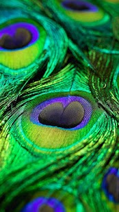 Really Cute Teal Teal Wallpaper Peacock Feather Live Wallpaper Android Apps On Google Play