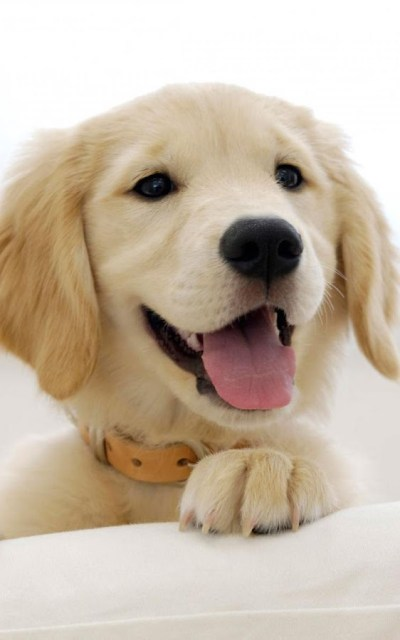 Puppies Live Wallpaper - Android Apps on Google Play