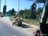 Horse & Cart.JPG