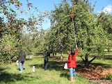 Apple Picking-1.JPG