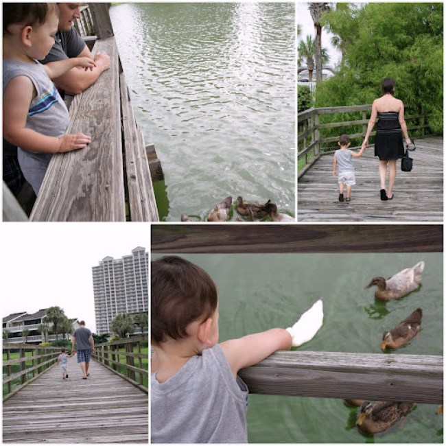 Picnik collage-ducks.jpg