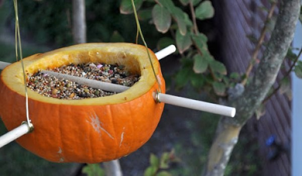 DIY Pumpkin Bird Feeder 4