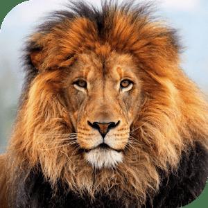 Download White Lion Live Wallpaper Google Play softwares - aoP2mm5G50Y4 | mobile9