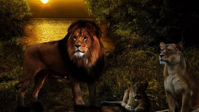 Lions Live Wallpaper - Android Apps on Google Play
