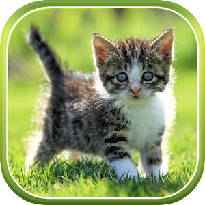 Cat Live Wallpaper - Android Apps on Google Play