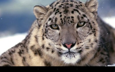 Leopard Live Wallpaper - Apps on Google Play