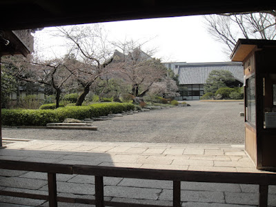 Sakura in bloom?